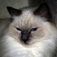 brian-avatar